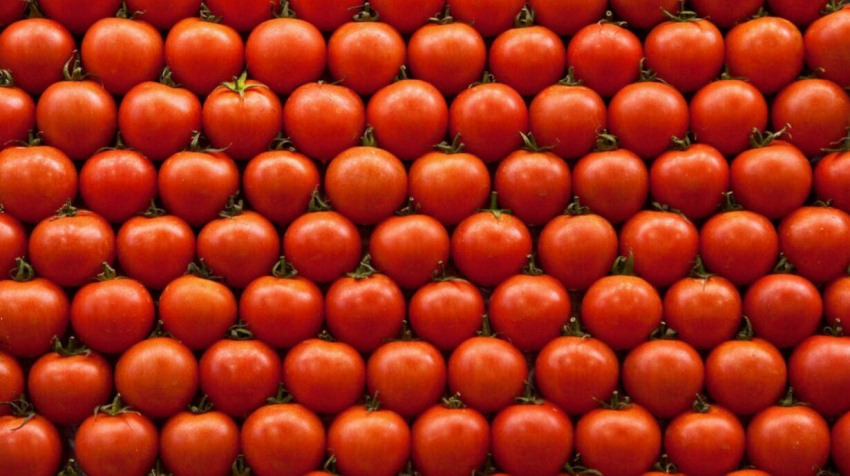 vegetable supplier tomatoes